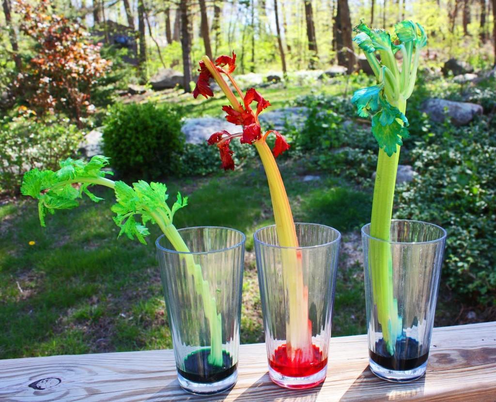 Celery Colors